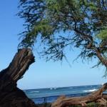 Hawaiiで夏休み