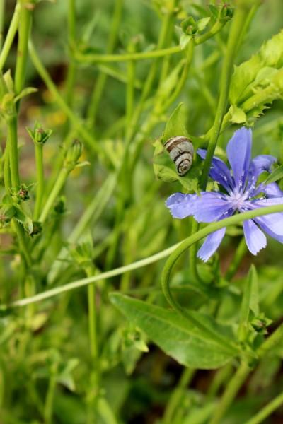 IMG_8531C レタスの花