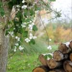 【LIFE STYLE】パリ近郊 花とともに暮らす⑬ 冬支度